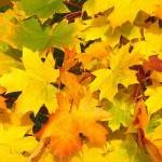 Podgórska Jesień Kulturalna 2013 – bezpłatne występy, wystawy i koncerty