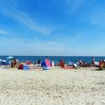 beach 501244 960 720 150x150 - Światowy Tydzień Zwierząt
