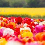 Romantyczna majówka we dwoje 150x150 - Gdzie znaleźć instagramowe miejsca we Wrocławiu?