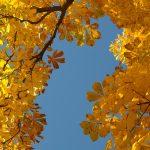 chestnut leaves 228072 1920 150x150 - Kostrzyn nad Odrą - miasto pełne zniszczeń i wdzięku