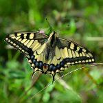 butterfly 491166 1920 150x150 - Plaża dla naturystów w Łodzi - największy taki punkt w centralnej Polsce