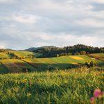 freestocks org 425054 unsplash 150x150 - Biały Dunajec - poznaj powody, dla których pokochasz to miejsce!