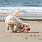 Psie plaże w Polsce – gdzie wybrać się nad morze z psem?