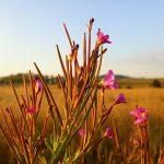 Śląskie wsie, które zmienią Twoją definicję odpoczynku w górach