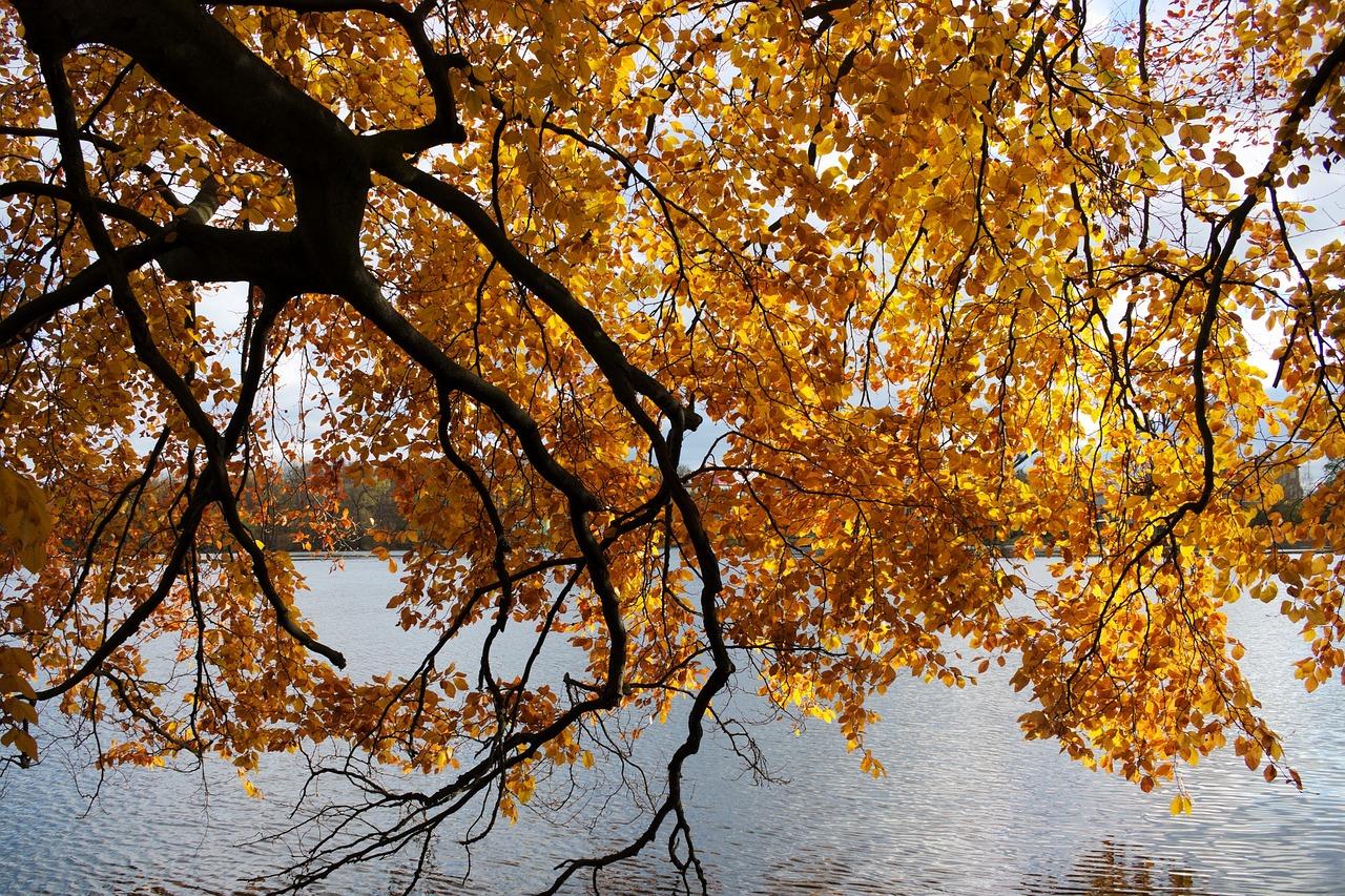 autumn 1825753 1280 - Piękne miejsca na Pomorzu, które musisz odwiedzić