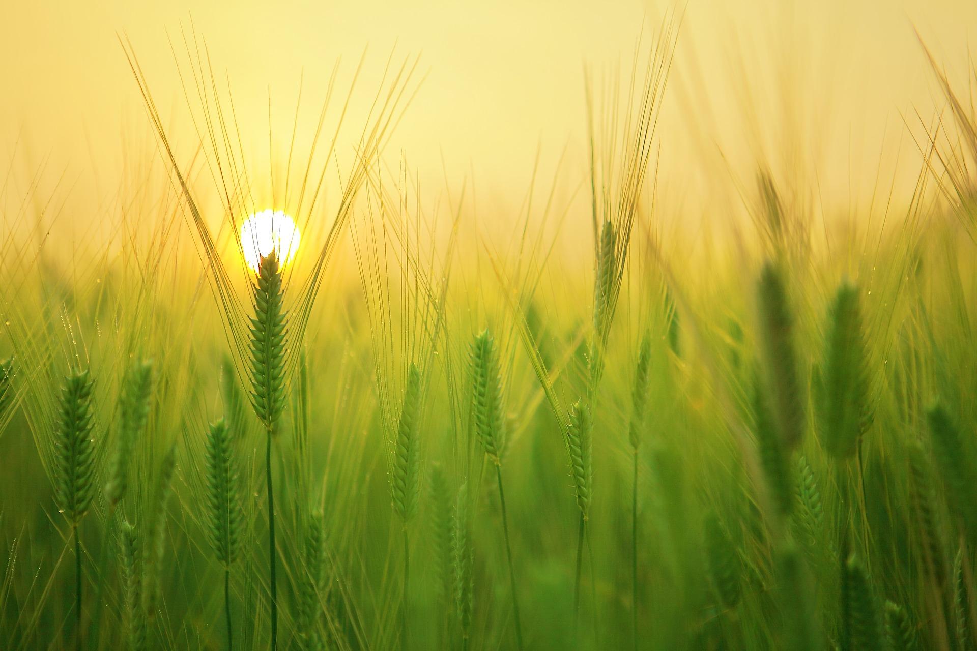 barley field 1684052 1920 - Piękne miejsca na Pomorzu, które musisz odwiedzić