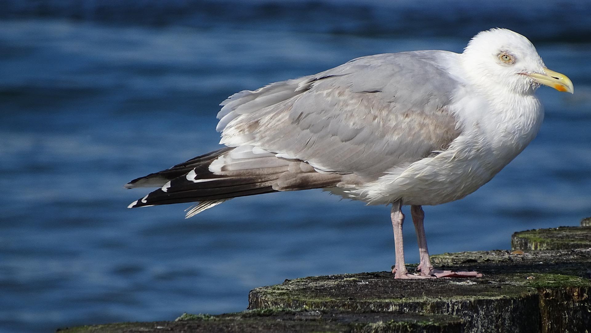 birds 3357475 1920 - Najlepsze miejsca na zachodnim Wybrzeżu Bałtyckim