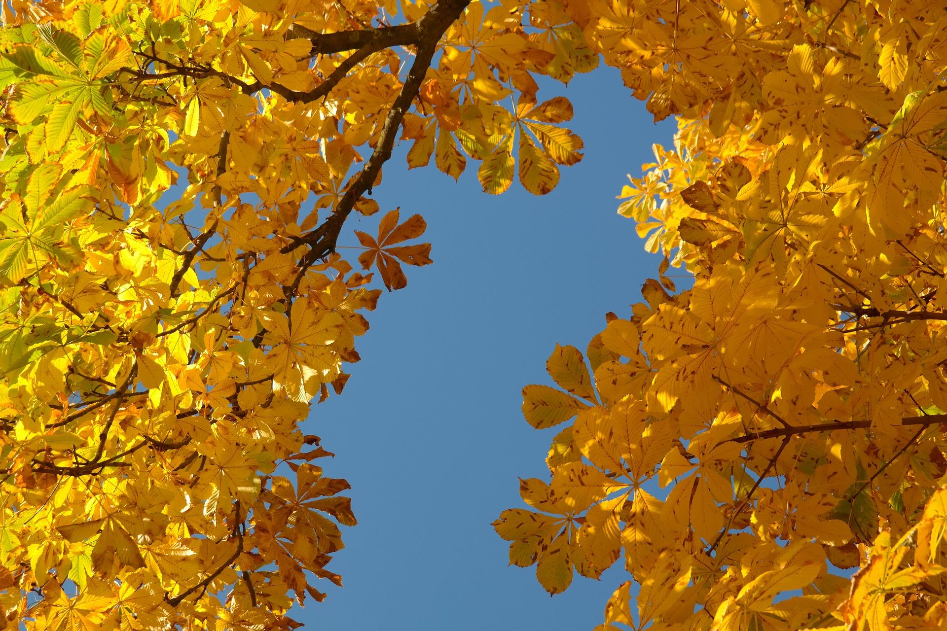 chestnut leaves 228072 1920 - Najpiękniejsze okolice Trójmiasta