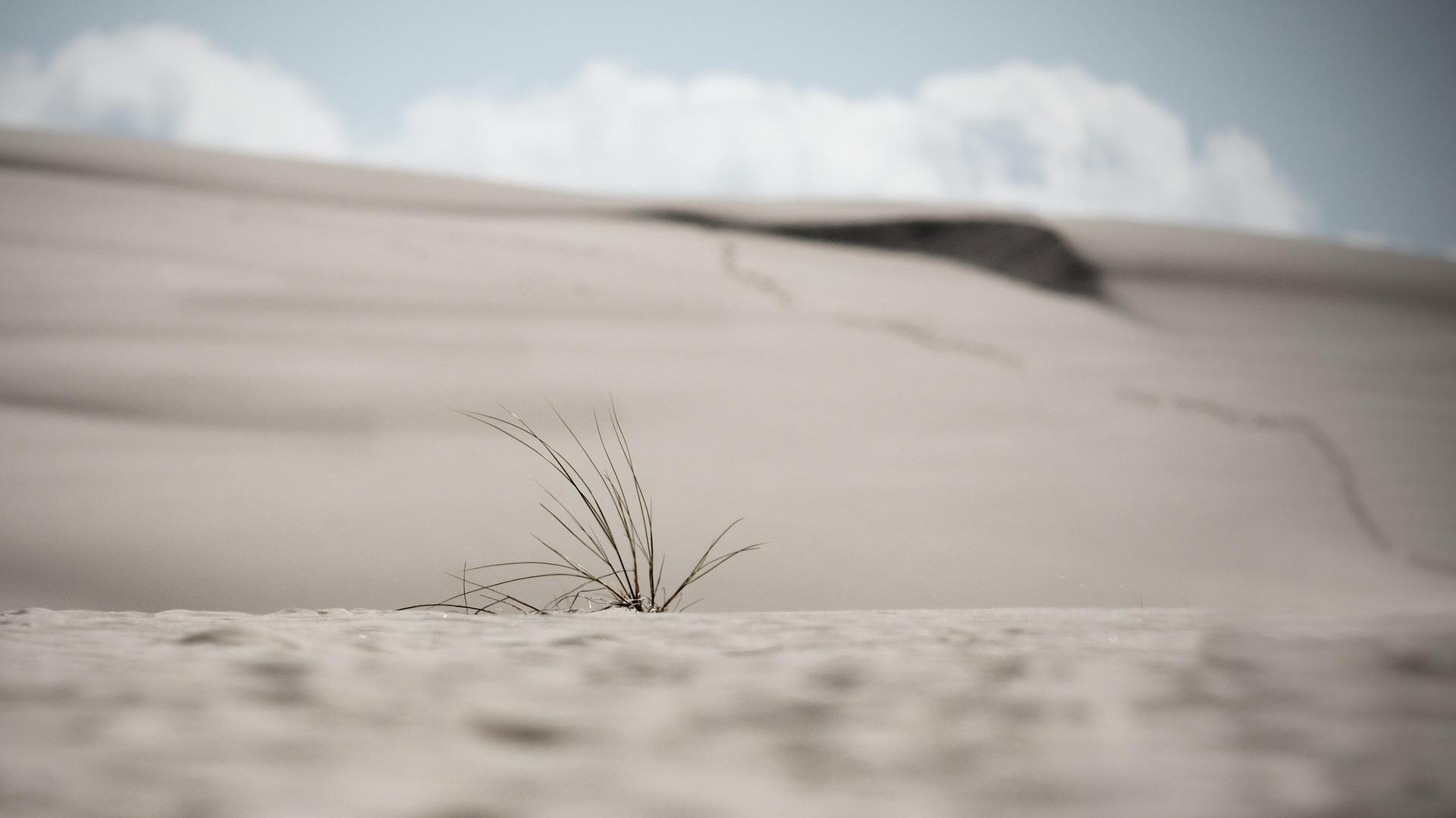 dunes 3580666 1920 - Najlepsze miejsca na zachodnim Wybrzeżu Bałtyckim