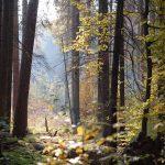 forest 2955432 1280 150x150 - Odkryj zakątki województwa Śląskiego