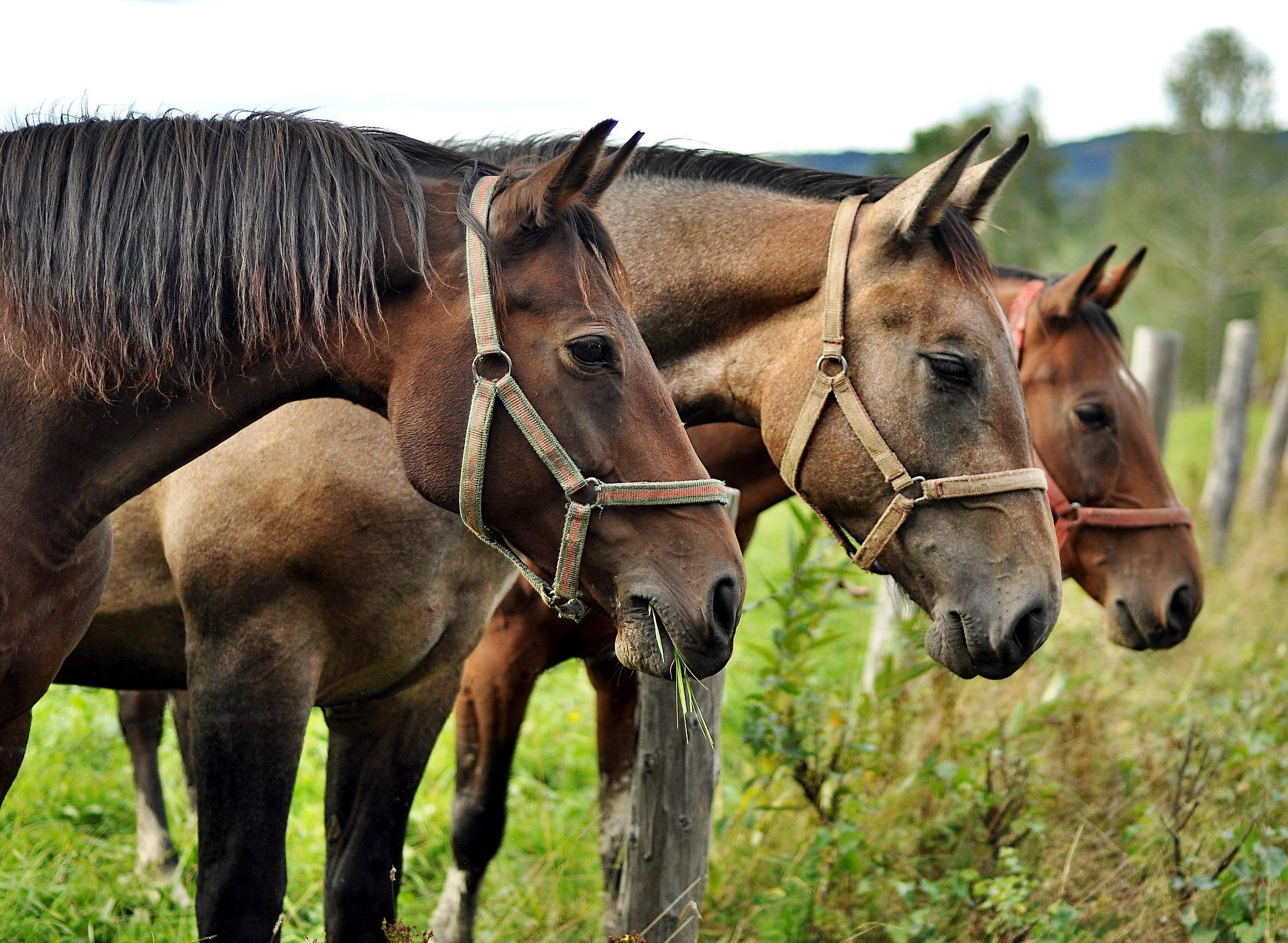 horses 2778167 1920 - Małopolskie skarby, czyli miejsca, które mogą Cię zaskoczyć