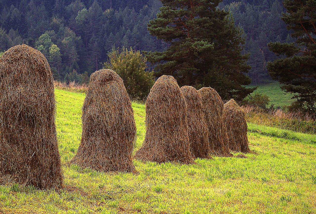 kopki hay 668952 1280 - Podkarpacie i jego 4 urocze wsie - Cisna, Rakszawa, Myczkowce, Krasiczyn