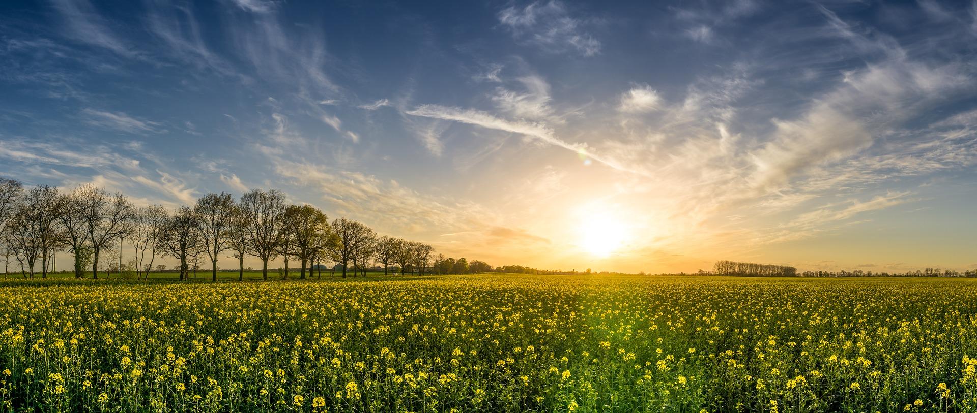 oilseed rape 2135026 1920 - Nad morzem i na wsi - idealna szóstka definiująca wypoczynek