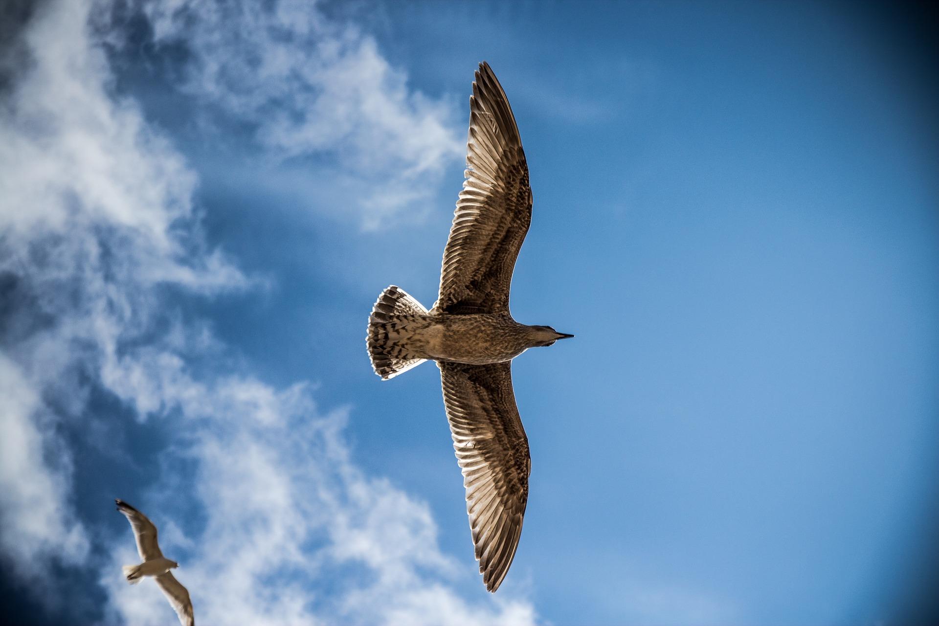 sea gull 765490 1920 - Nad morzem i na wsi - idealna szóstka definiująca wypoczynek