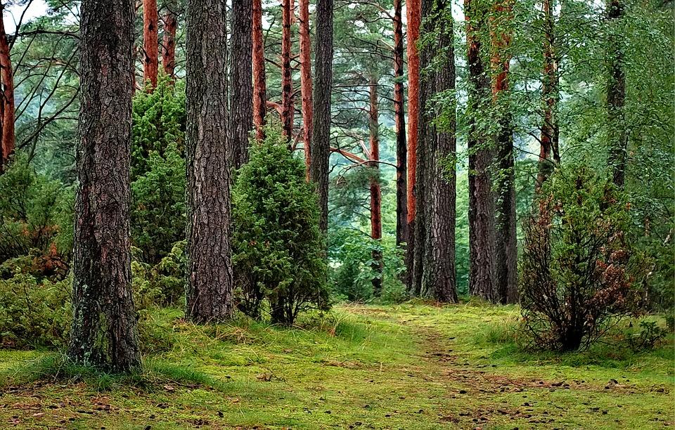 forest 1973952 960 720 - Majówka blisko Warszawy - odpoczynek w dziczy dla zabieganych