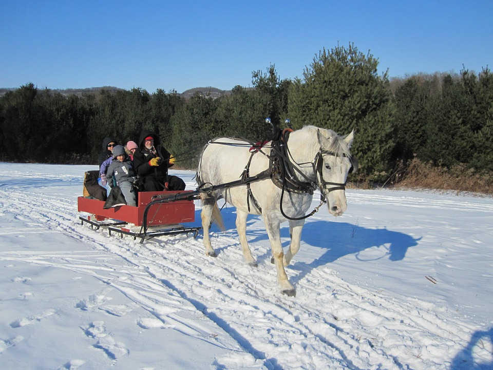 horse 97344 960 720 - W góry bez nart - co robić, gdzie jechać?