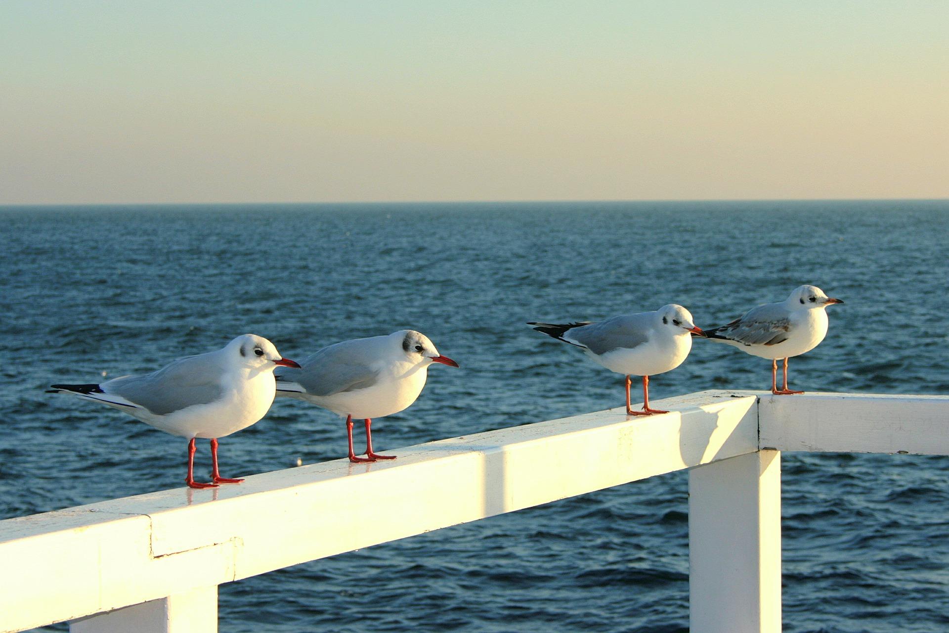 the seagulls 630915 1920 - Jak radzić sobie z odwoływaniem rezerwacji gości?