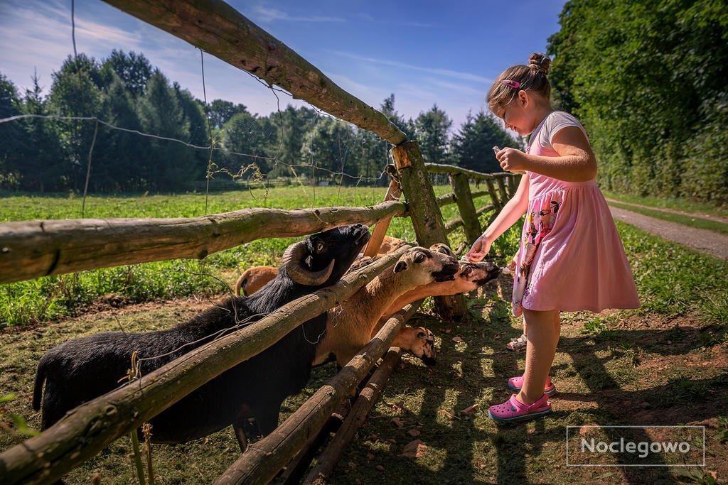 380737 23 lubawka eko bajka domki w gorach - Wakacje na eko farmie - nowoczesna ekoturystyka