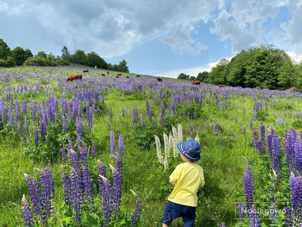 472314 531 lubawka eko bajka domki w gorach - Wakacje na eko farmie - nowoczesna ekoturystyka