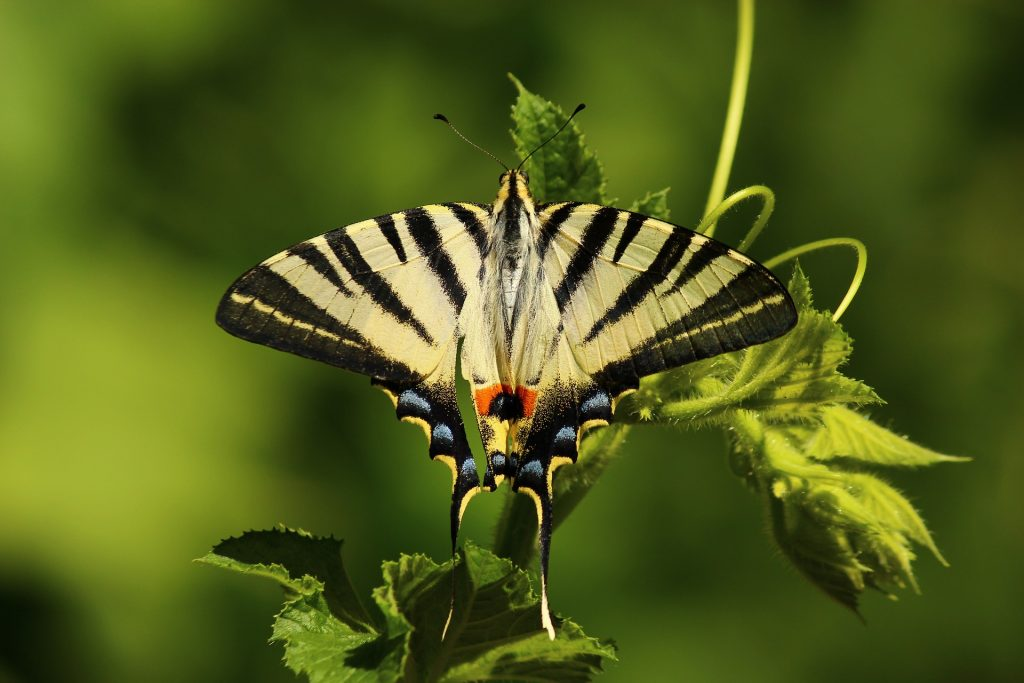 butterfly 1701685 1920 1024x683 - Rewal i okolice - co warto zobaczyć?