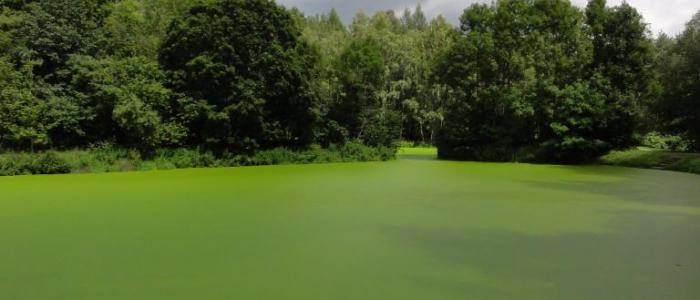 piekielko2 - 10 wyjątkowo zielonych tras na wiosnę. Ranking top10 najlepszych tras