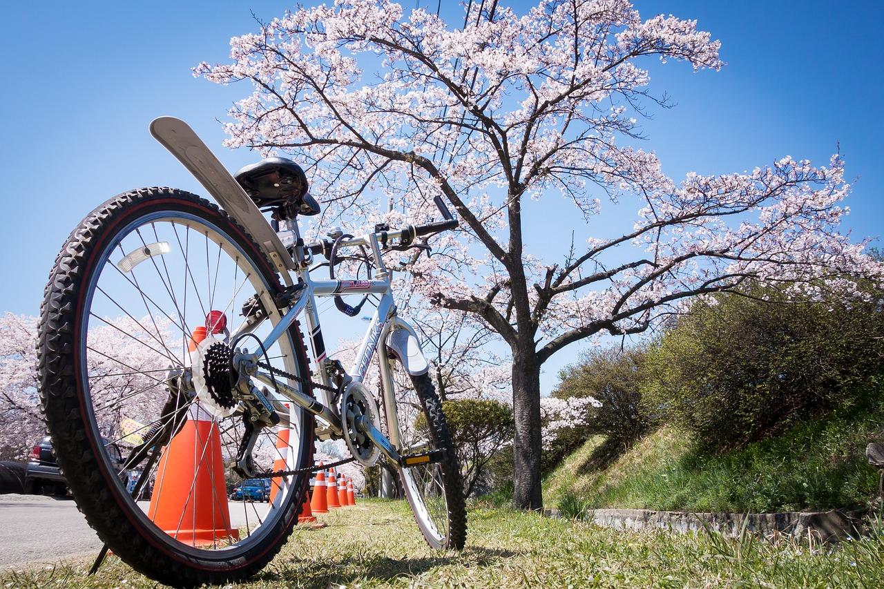 rower wiosna - Wiosna nadchodzi! Jak przygotować rower do sezonu?