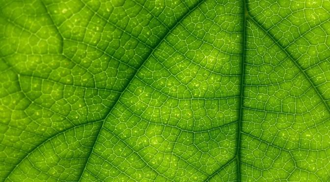 Jak przygotować ekologiczny Sylwester?