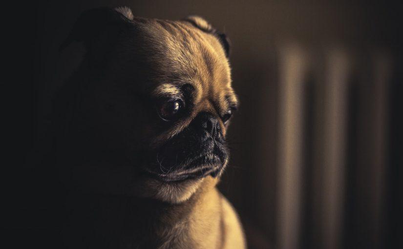 Jak uspokoić psa podczas fajerwerków?