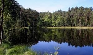 Park Narodowy Borów Tucholskich, źródło: wikimedia.org