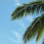 Gorący sylwester – spędź go w tropikach, na morzu, w parku wodnym