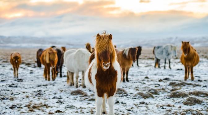 Sylwester w siodle – pomysł dla miłośników koni i agroturystyki