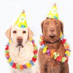 Jak zorganizować udaną imprezę karnawałową?